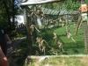 Állatkerti kirándulás 1b